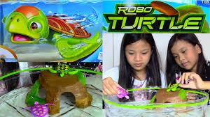 خرید پستی  لاک پشت رباتیک و واقعی ربو