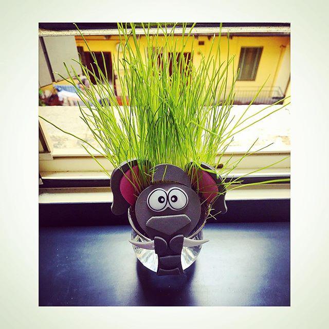سبزه عروسکی فیلی برای سفره هفت سین